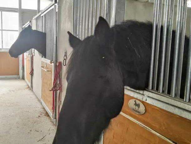 box-cavalli-paddock